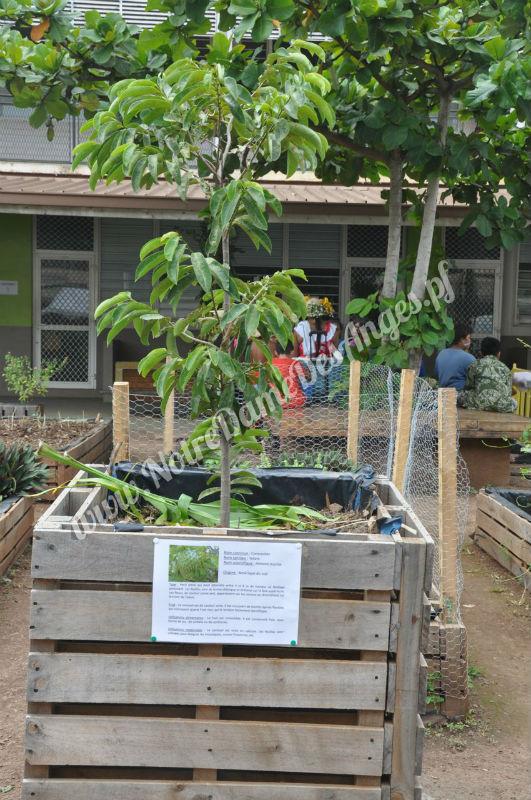 Conna tre les plantes du jardin - College du jardin des plantes ...