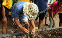 Plantation de haricots au jardin