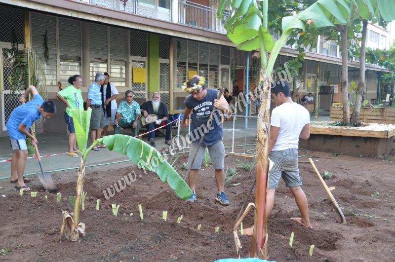 Plantation de taro au jardin for Plantation au jardin